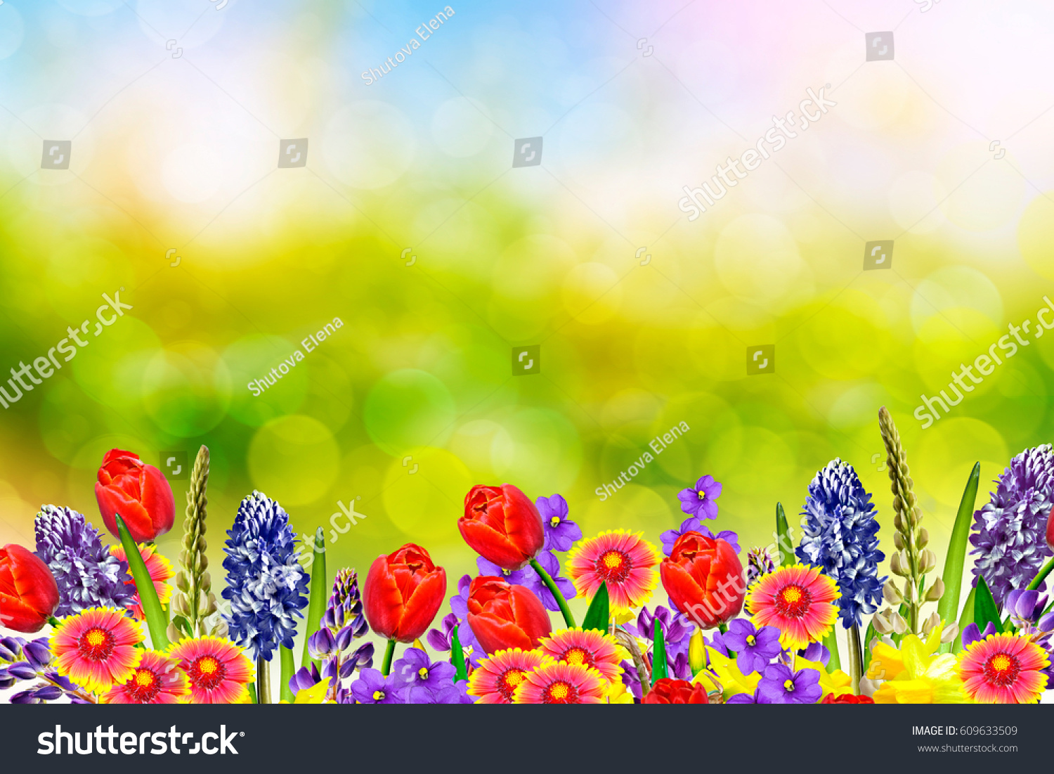 Bright Colorful Spring Flowers Daffodils Tulips Stock Photo Edit