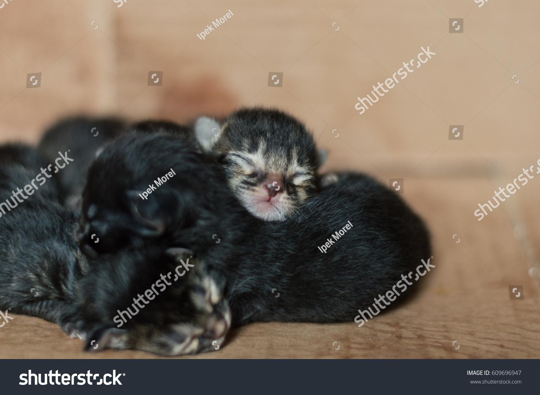 Little Blind Newborn Baby Kittens Sleeping Stock
