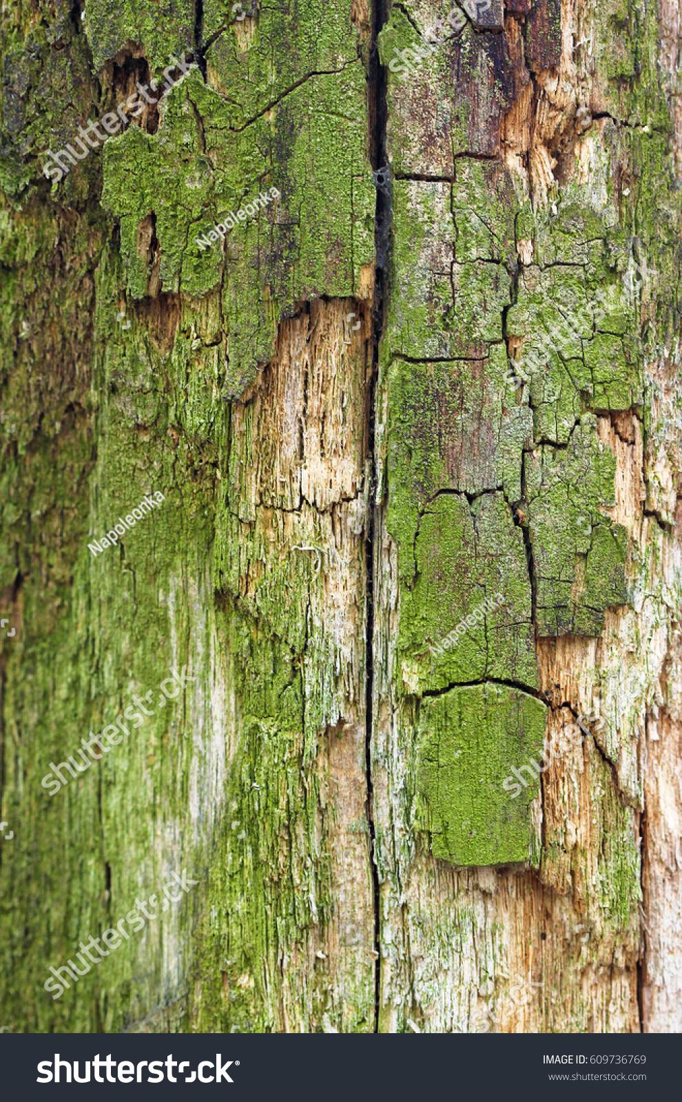 Cracks Green Bark Tree Stock Photo (Royalty Free) 609736769 ...