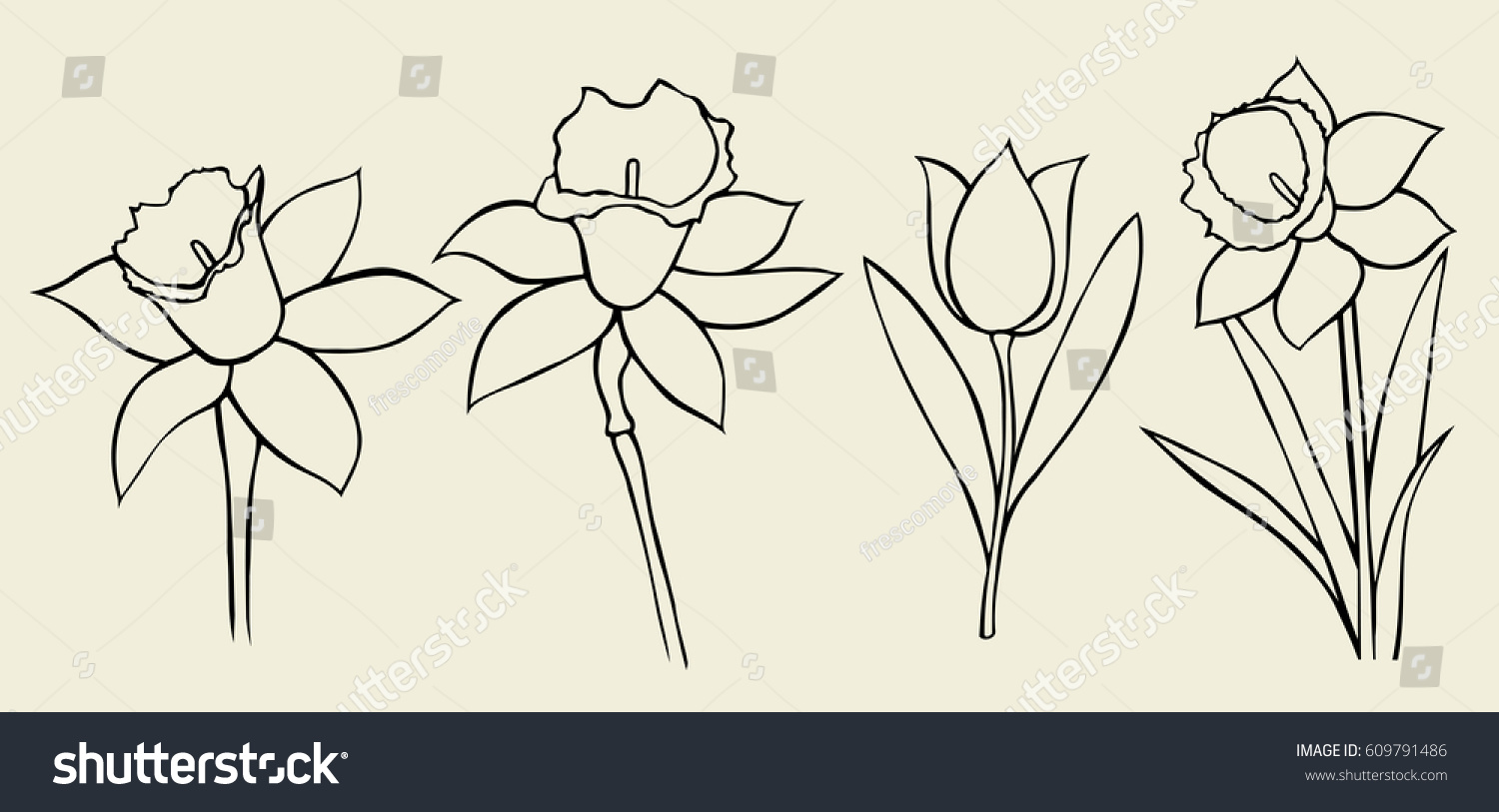 Set Flower Isolated On White Background Stock Vector Royalty Free