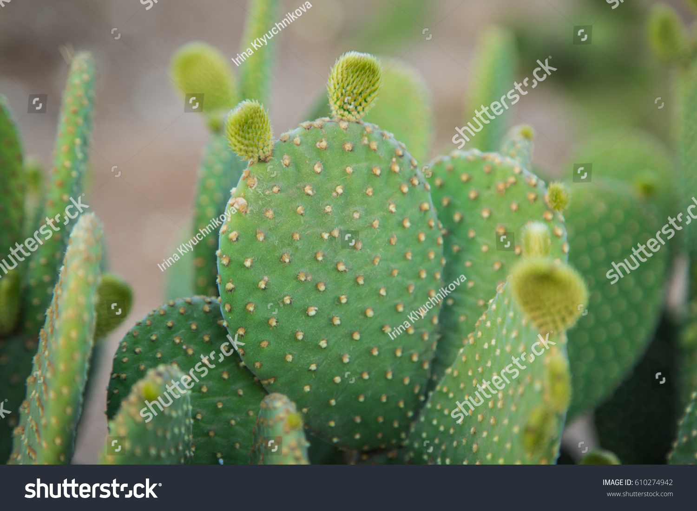 cactus texture background cactus desert stock photo