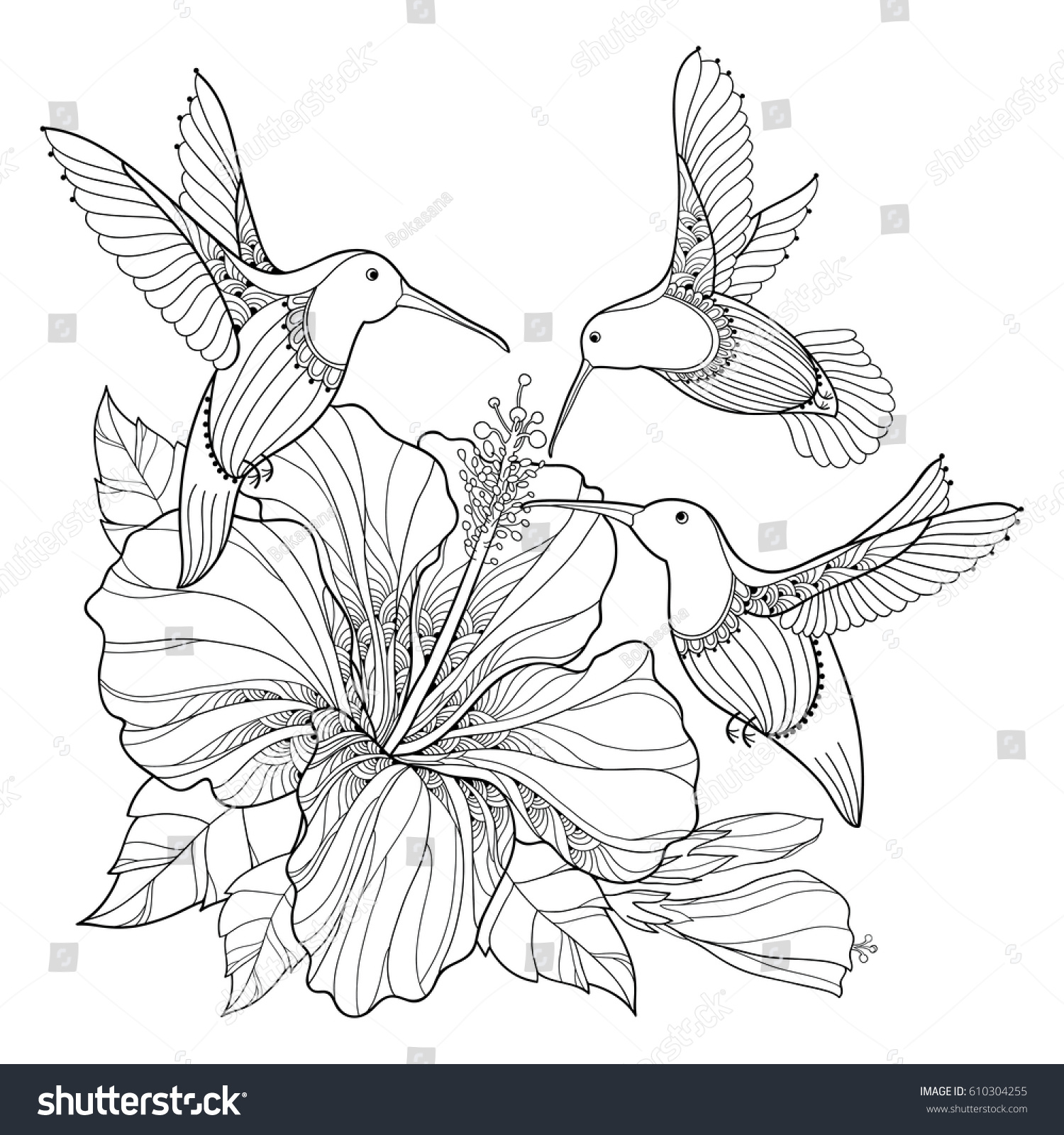 vector flying hummingbird colibri ornate hibiscus stock vector