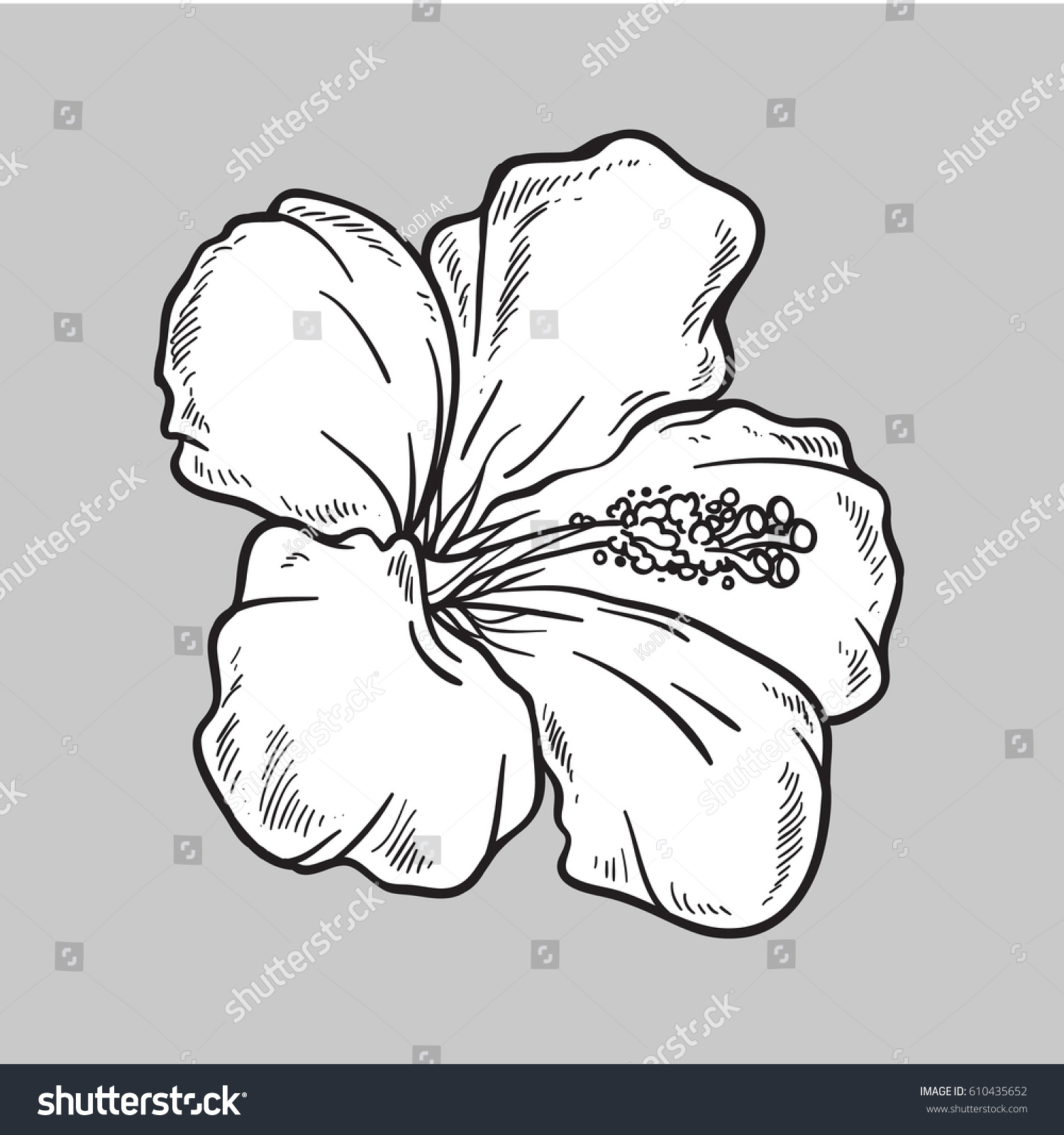 Vector Hibiscus Flower Isolated On Grey Stock Vector Royalty Free