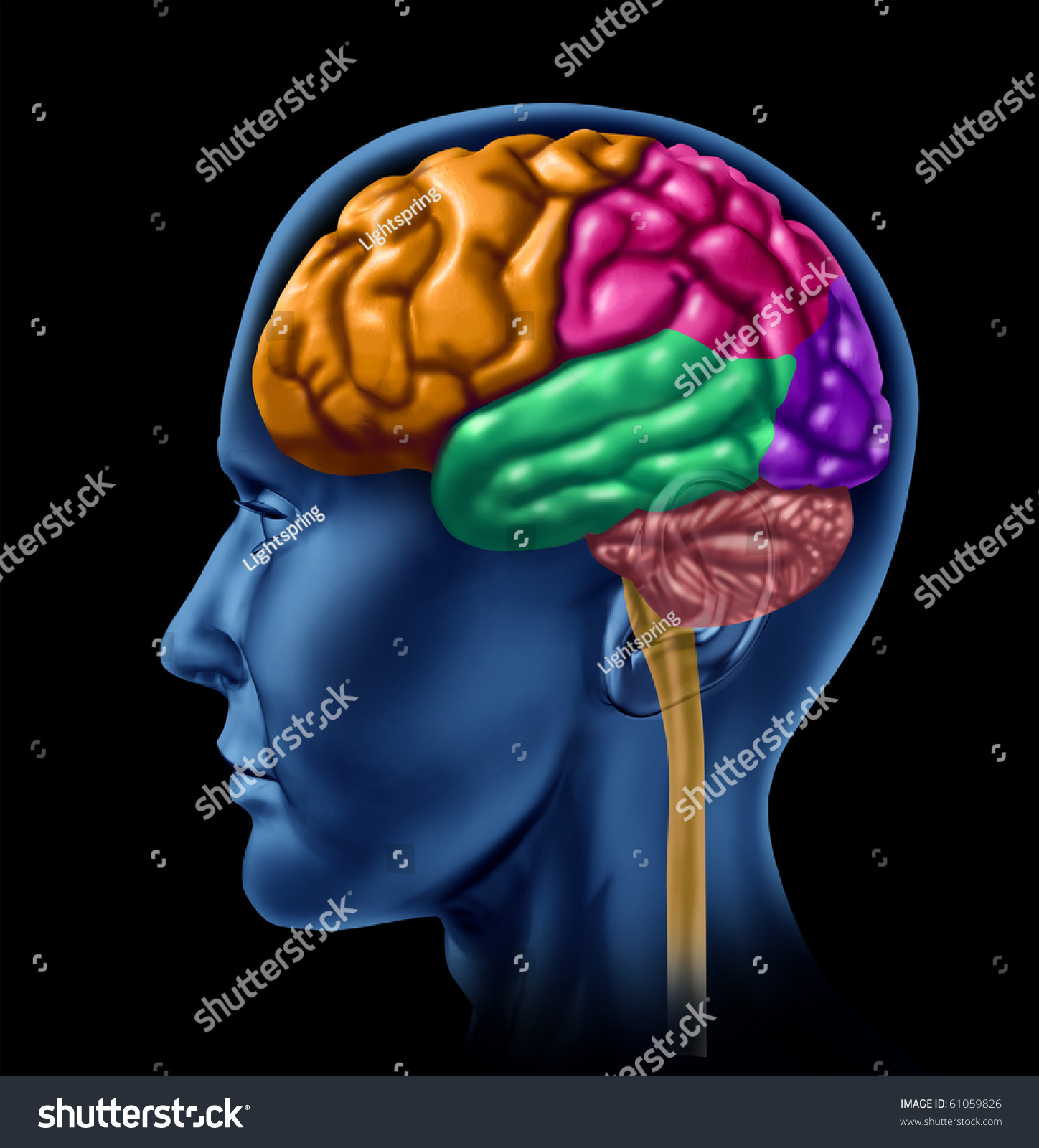 brain lobe sections divisions of mental neurological lobes activity stock photo 61059826. Black Bedroom Furniture Sets. Home Design Ideas