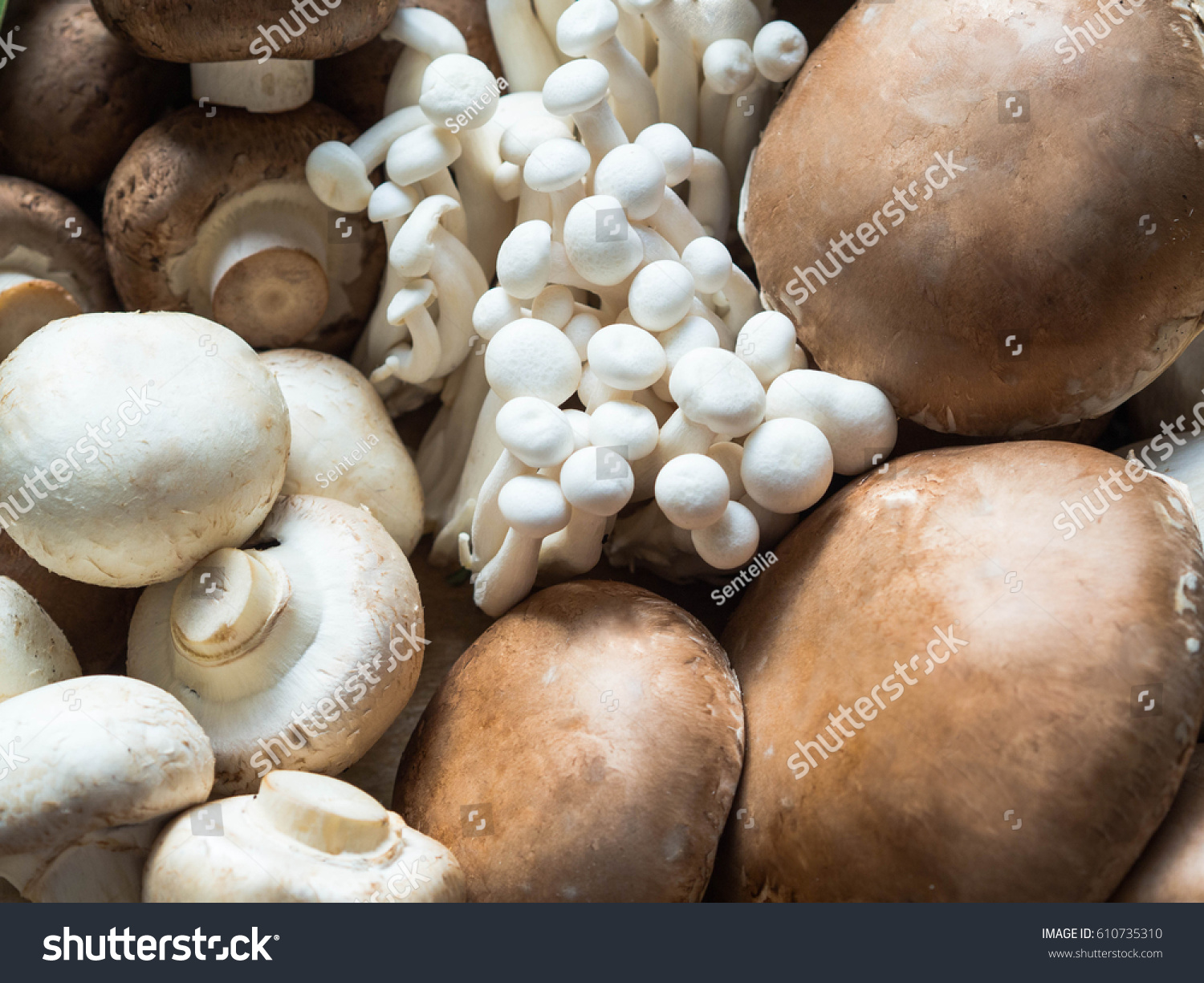 Various Raw Mushroom Types Portobello Mushrooms Stock Photo Edit Now 610735310