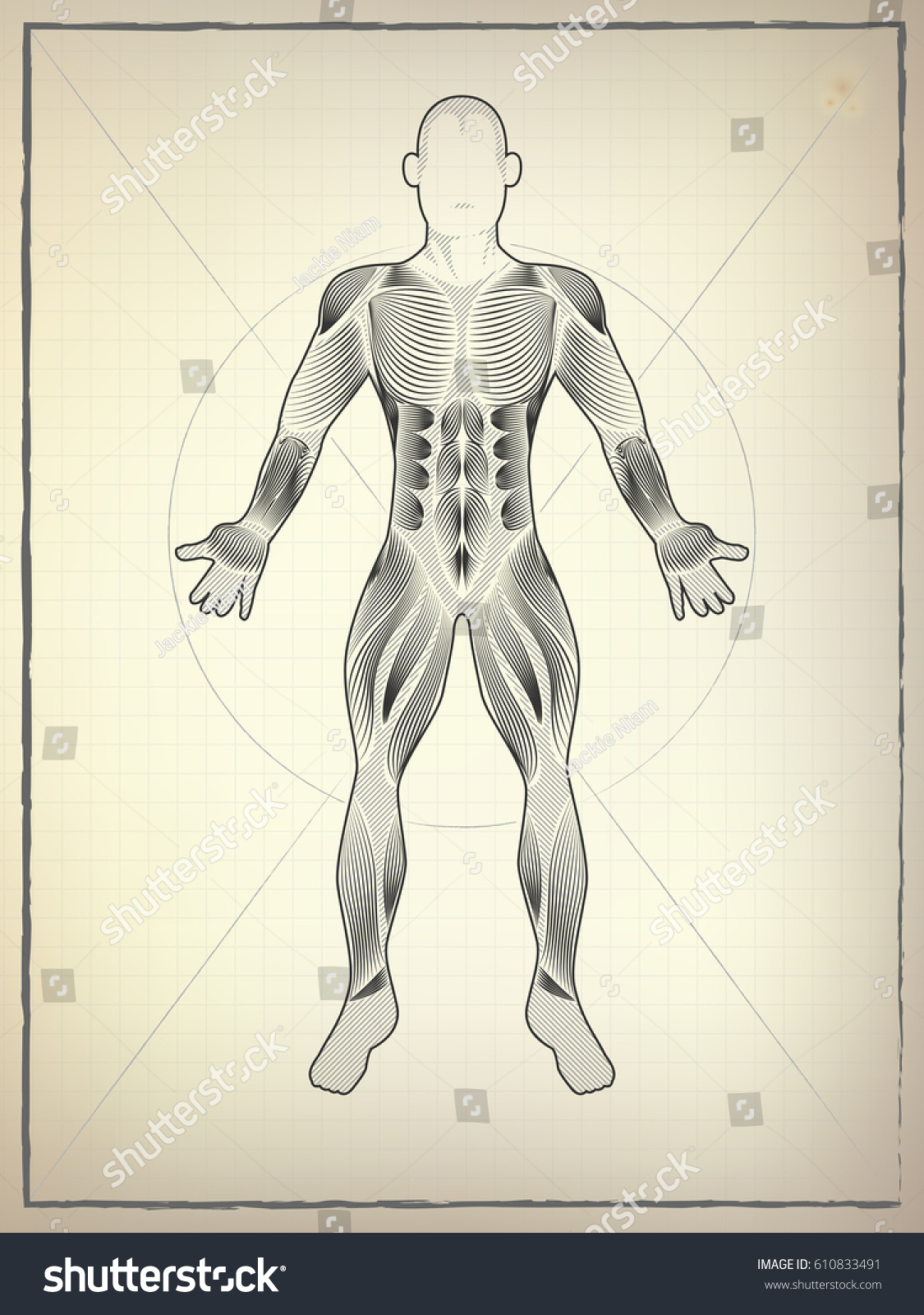 Male Muscular Anatomy Vector Scheme Drawing Stock Vector Royalty