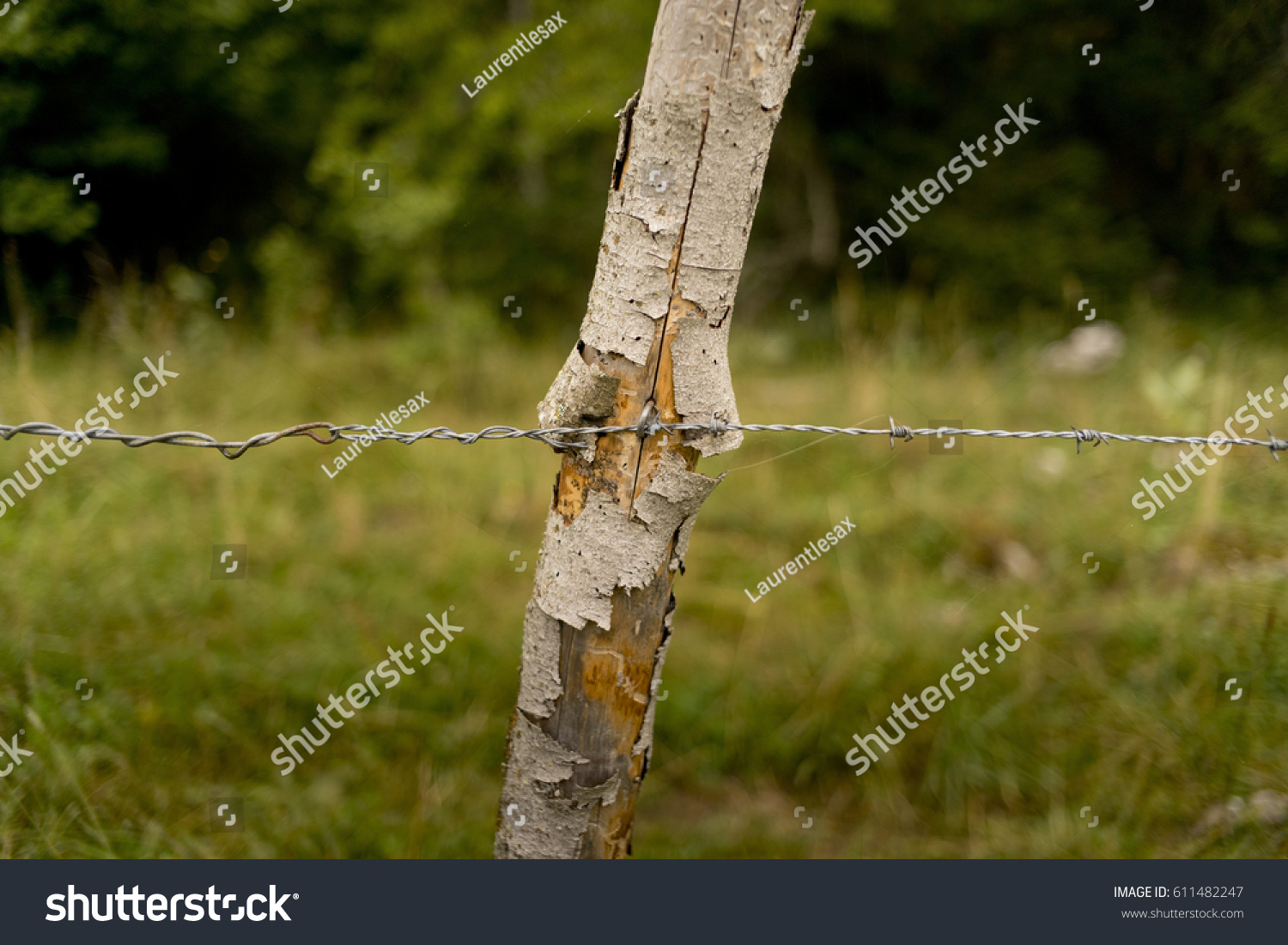 Barbed wire enclosing a field at countryside with green field and wood in the background #611482247