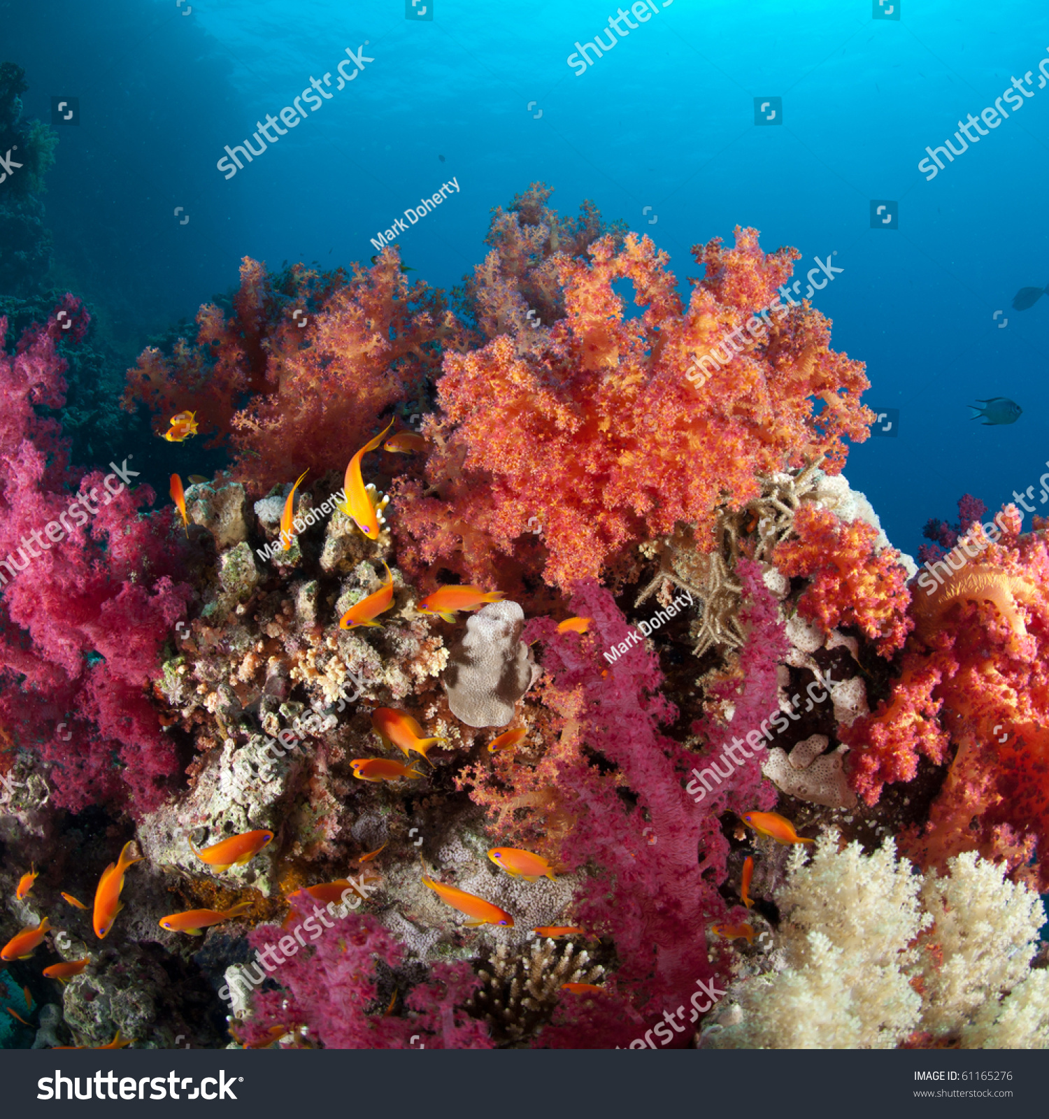 Vibrantly Coloured Soft Coral Reef Red Stock Photo (Royalty Free ...