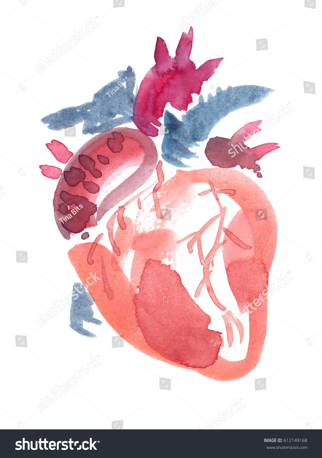 Abstract Anatomical Human Heart Painted Watercolor Stock