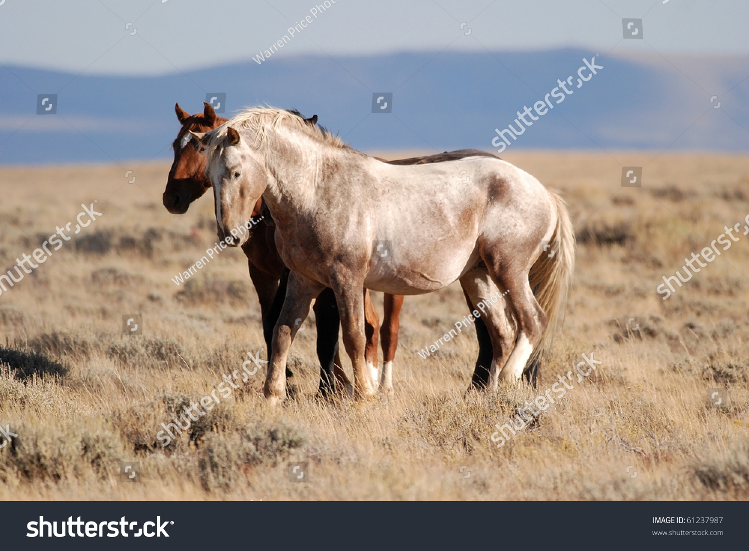 Horse Property Butte County