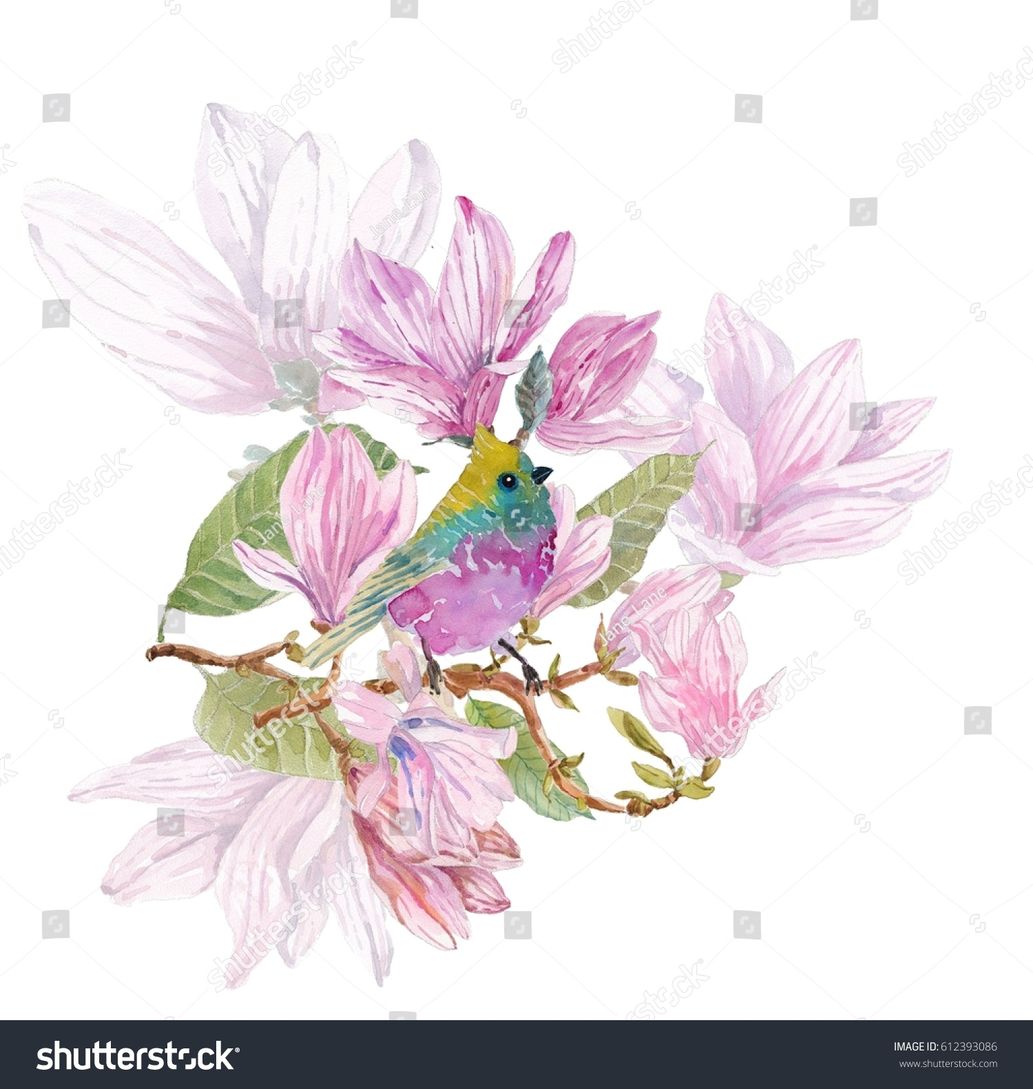 Watercolor Branches Magnolia Beautiful Flowers Bird Stock