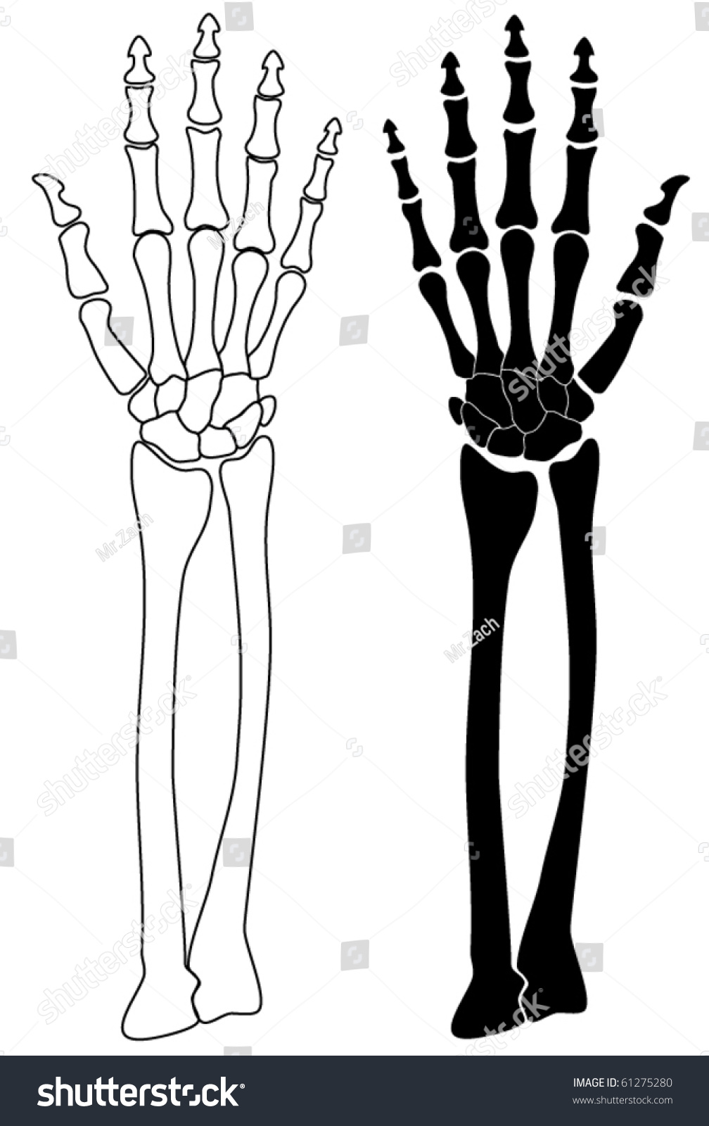 vector human skeleton hand stock vector 61275280 shutterstock rh shutterstock com Skeleton Hand Pointing Finger skeleton hand peace sign vector