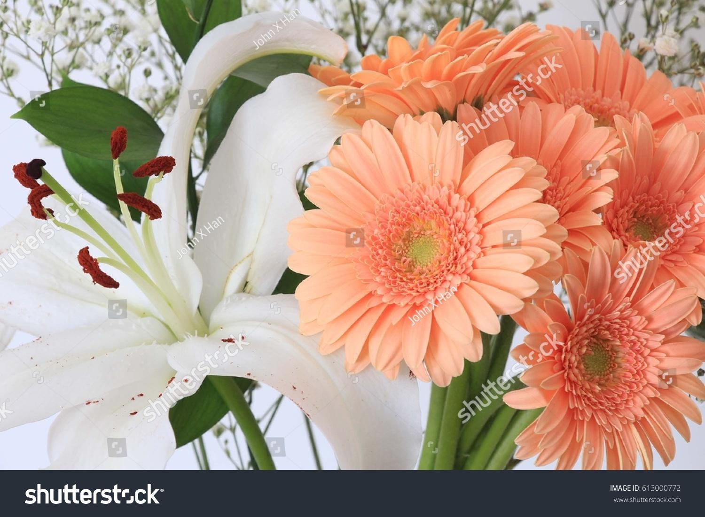 Beautiful Orange Gerbera Flowers White Lily Stock Photo Royalty