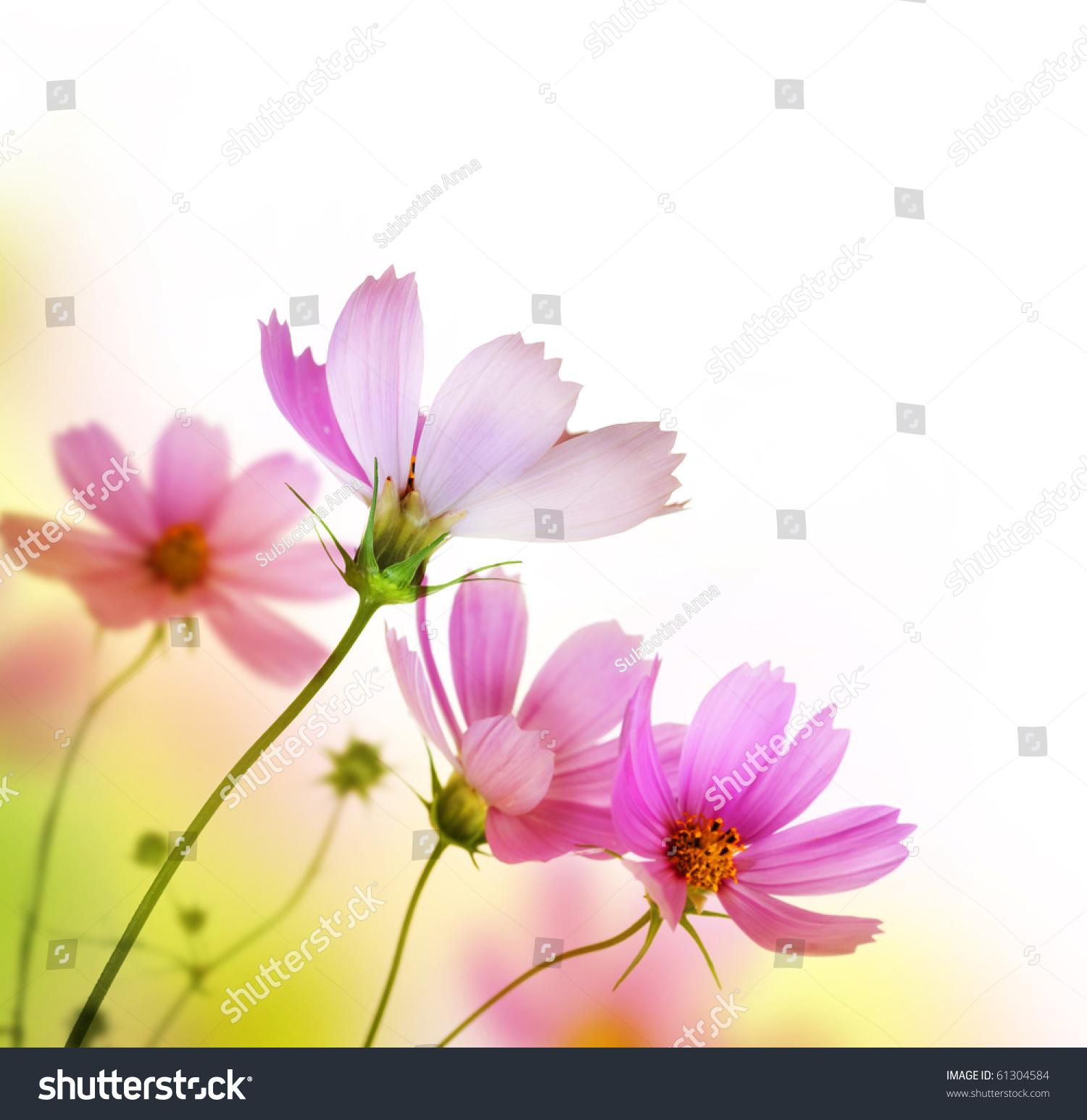 beautiful floral borderflower design stock photo 61304584