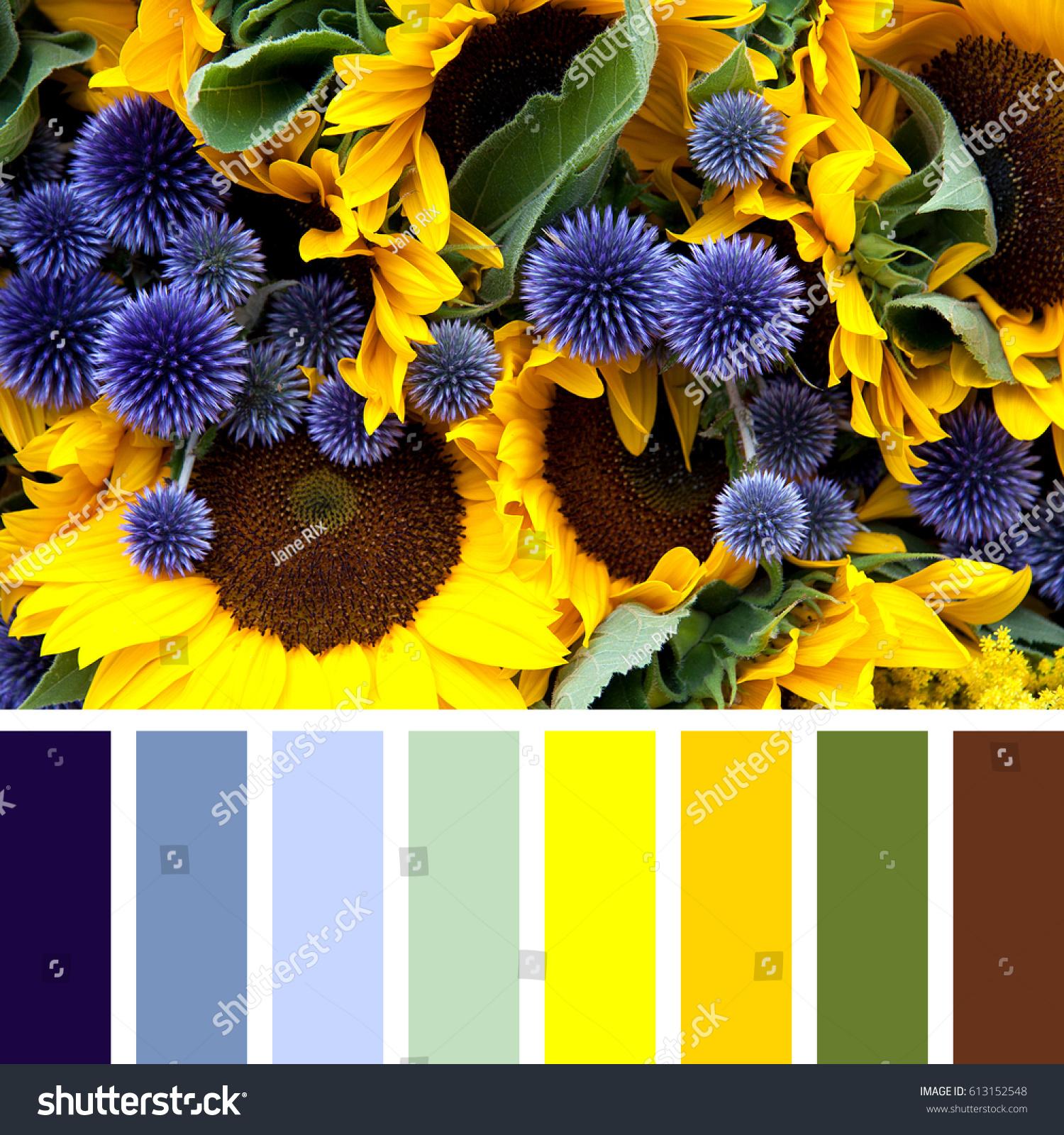 Closeup Sunflowers Allium Flowers Colour Palette Stock Photo 100