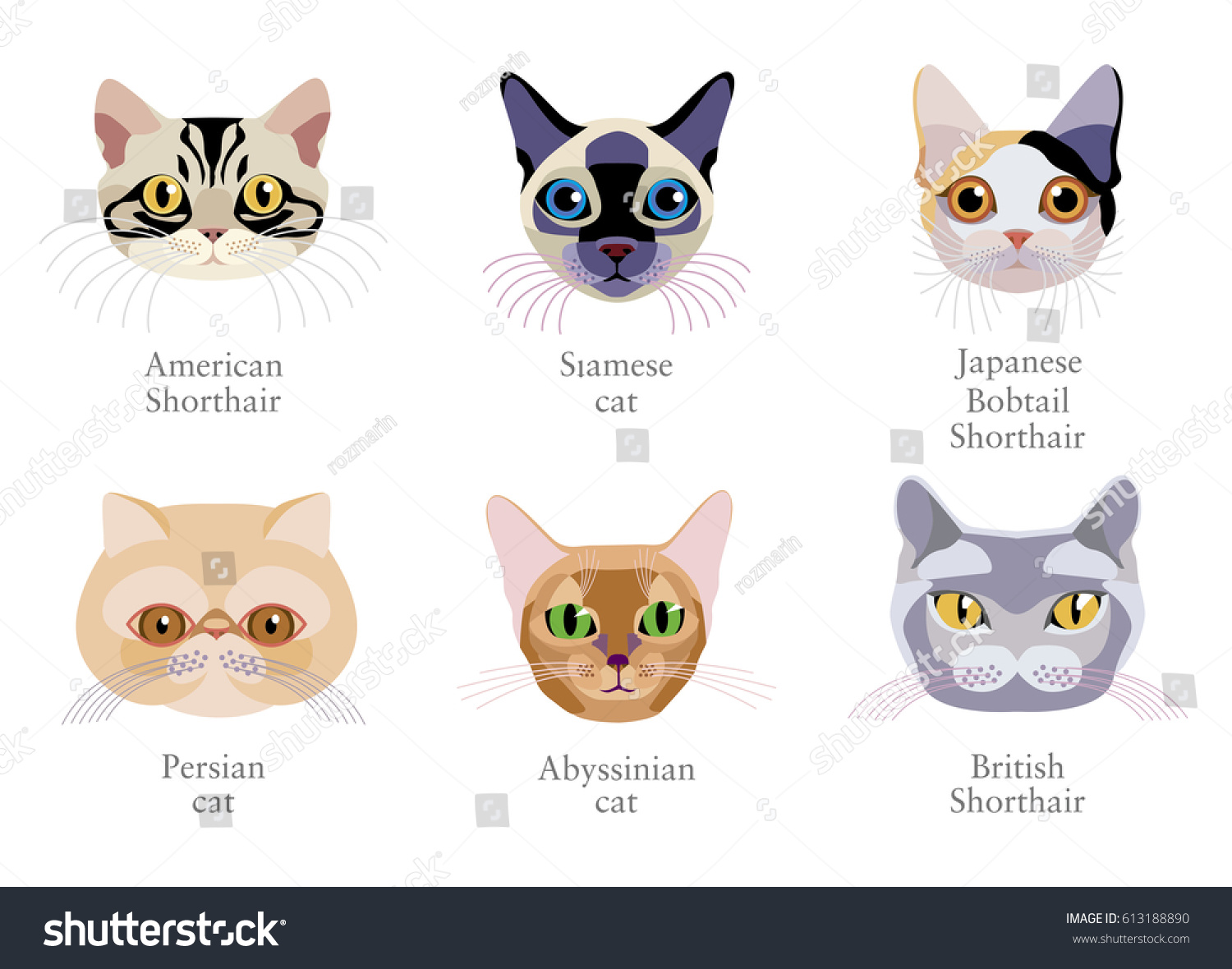 Different Breed Cats Persian Cat Japanese Stock Vector