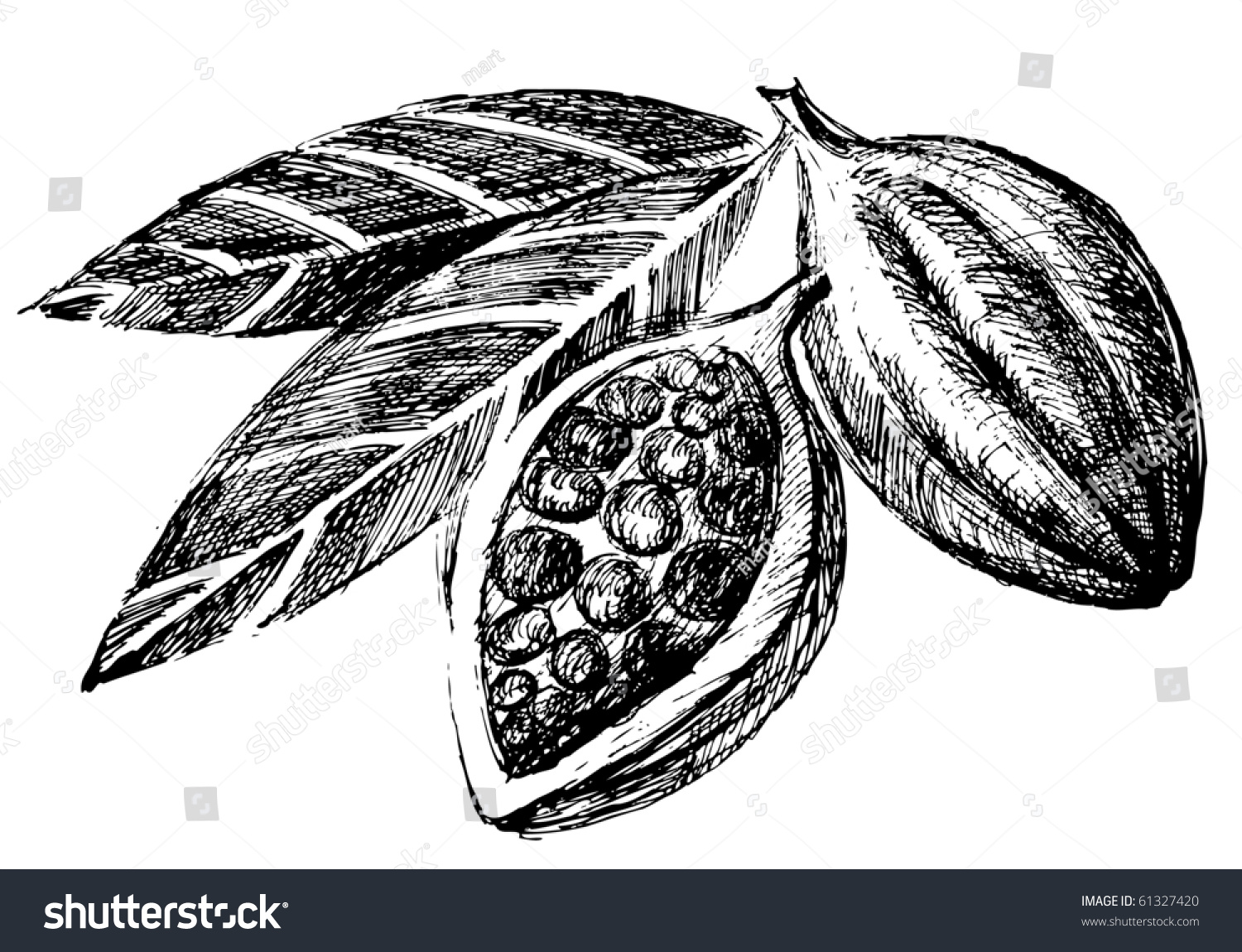 hand drawn cacao beans icon stock vector 61327420