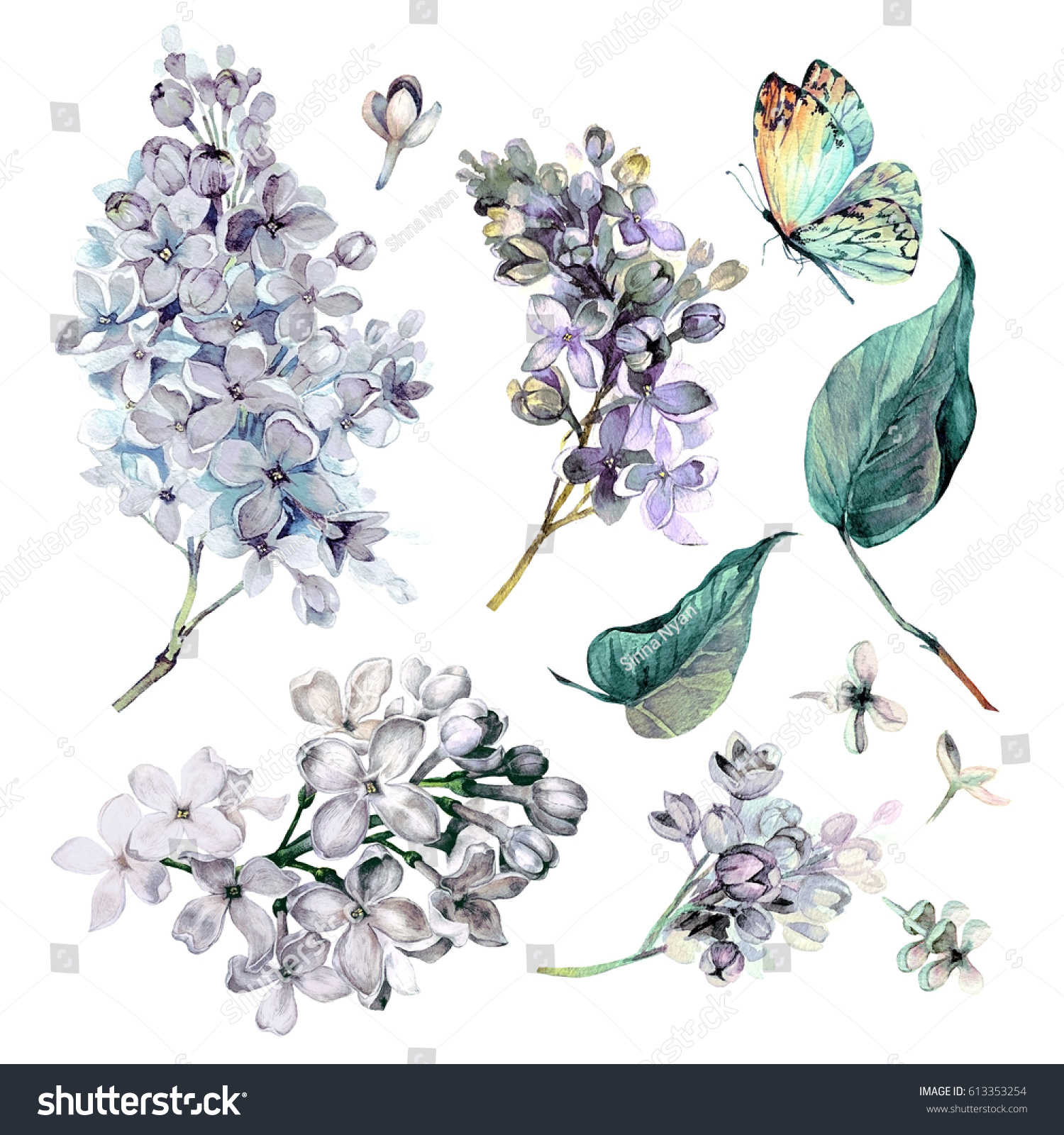 watercolor collection white lilac flowers leavesのイラスト素材