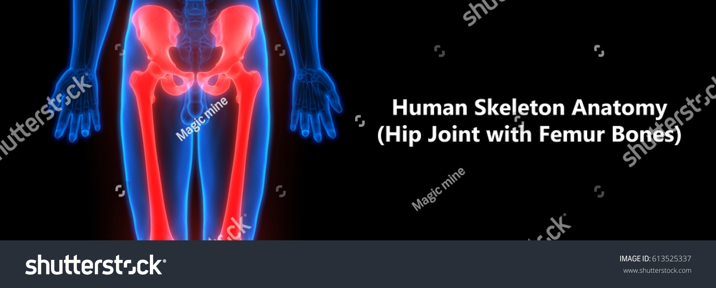 Human skeleton anatomy hip femur 3 d stock illustration 613525337 human skeleton anatomy hip with femur 3d ccuart Choice Image