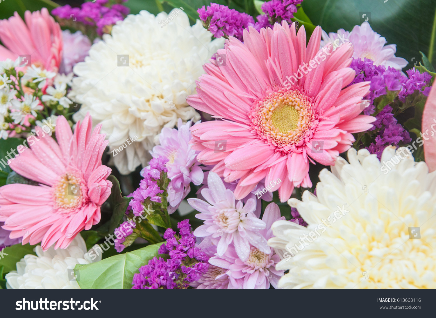 Multi Color Gerbera Lily Flowers Stock Photo Edit Now 613668116