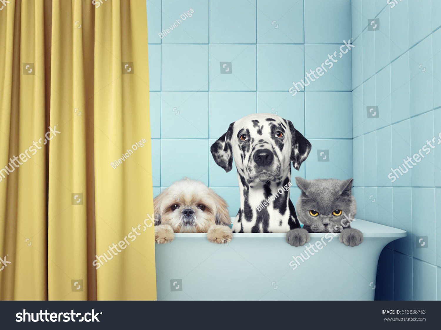 Cute Two Dogs Cat Bath Stock Photo (Edit Now) 613838753 - Shutterstock