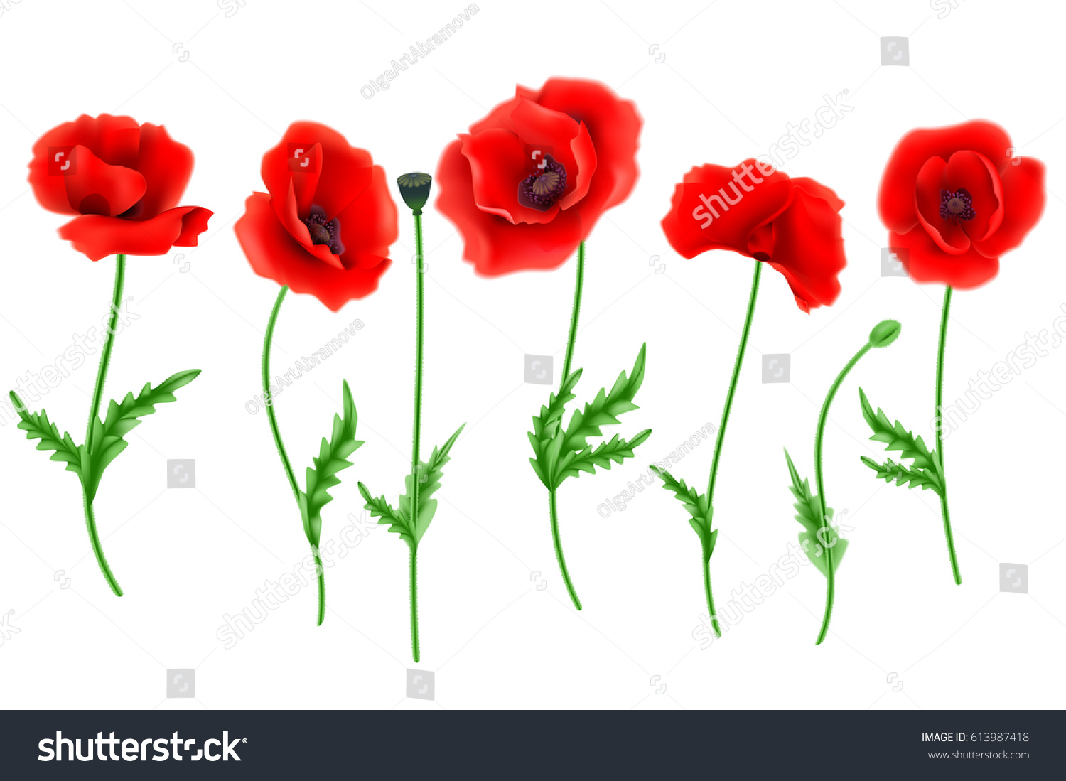 Red Poppy Flower Isolated On White Stock Vector Royalty Free