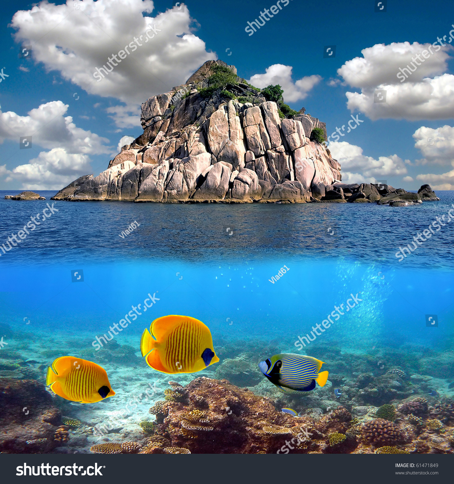 Tropical Island Paradise: Tropical Paradise Corals On Reef Top Stock Photo 61471849