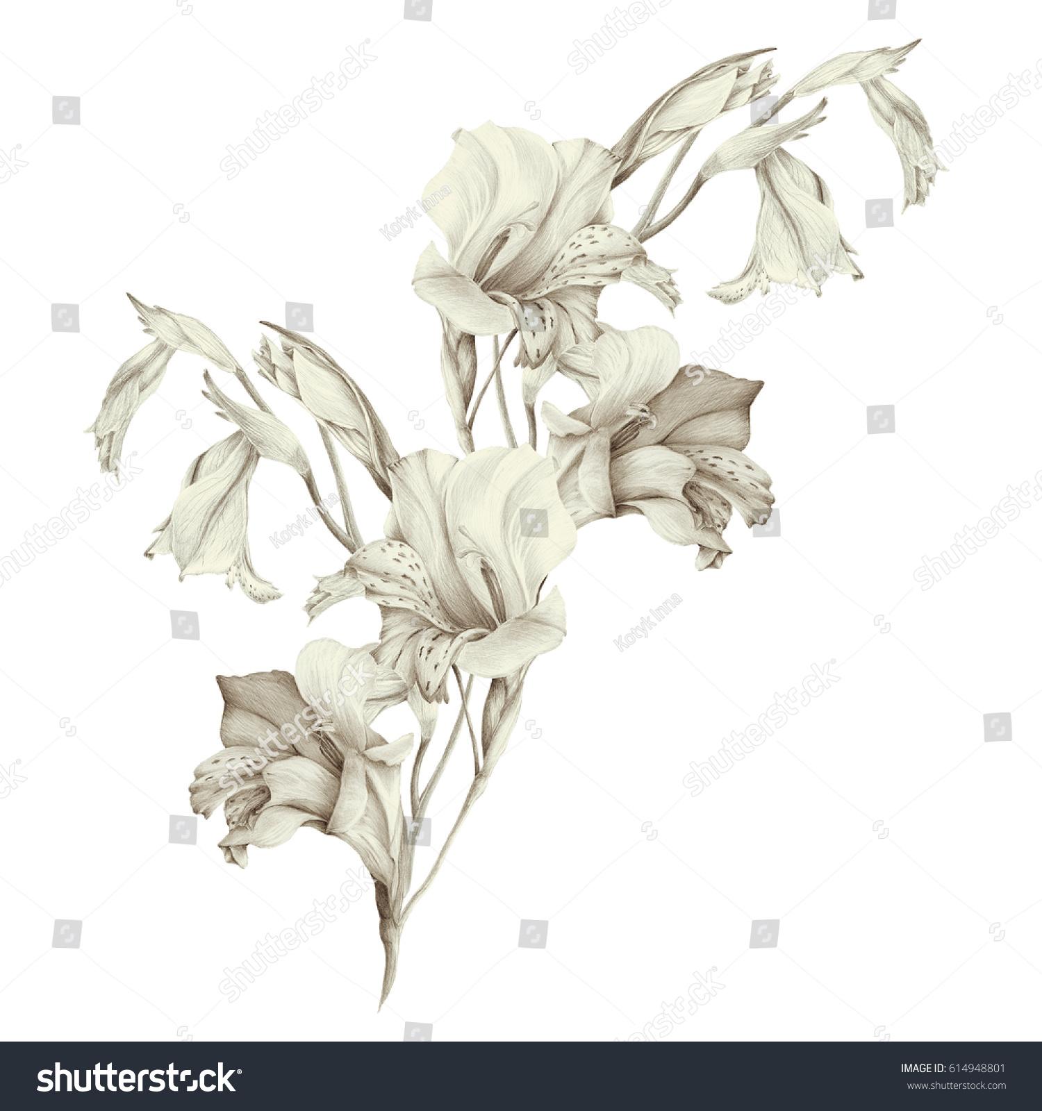 Gladiolus Abstract Wallpaper Floral Motifs Wallpaper Stock