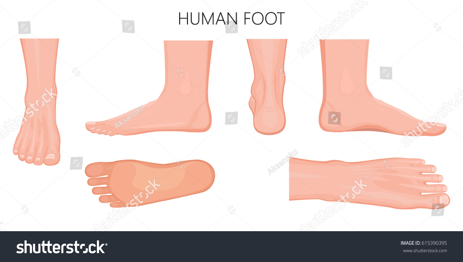 Different Views Human Foot Front Back Stock Vector Royalty Free