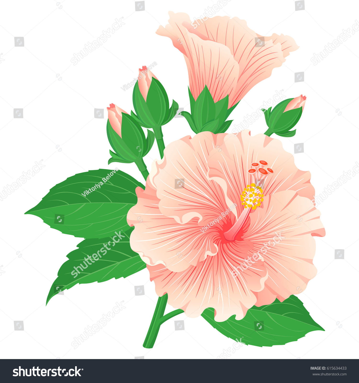 Set Multicolored Hibiscus Flowers Buds Leaves Stock Vector Royalty