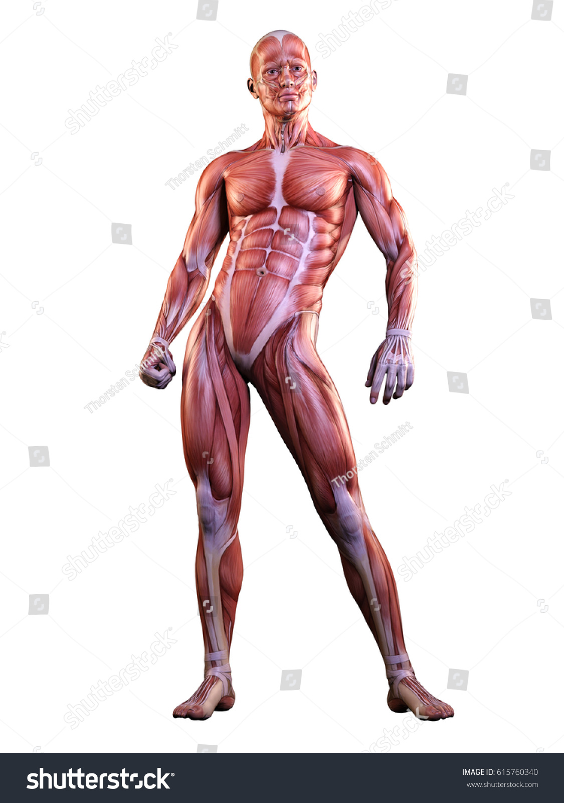 Muscle Man Anatomy Posing 3 D Illustration Stock Illustration