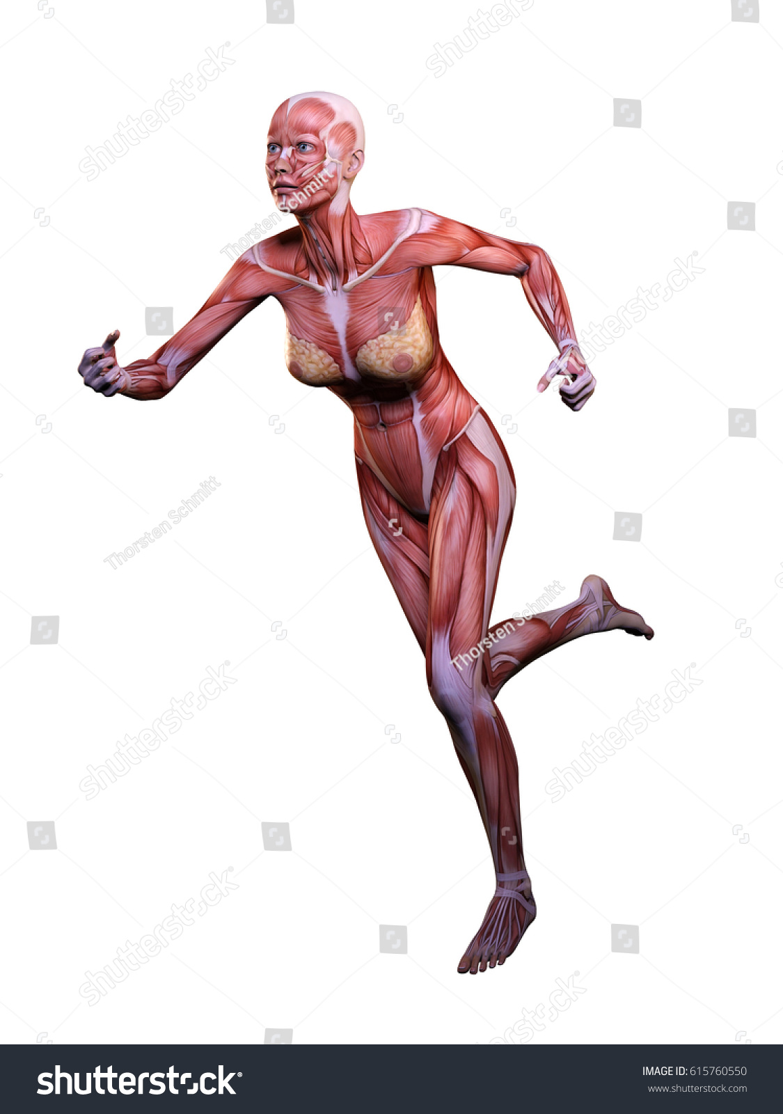 Muscle Woman Anatomy Motion 3 D Illustration Stock Illustration ...