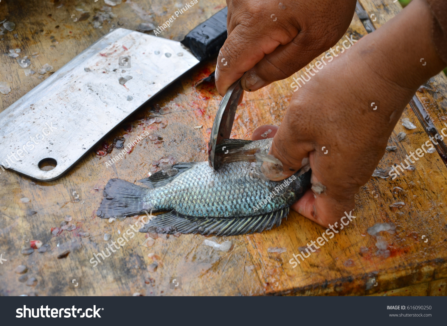 How to Scale a Fish How to Scale a Fish new foto
