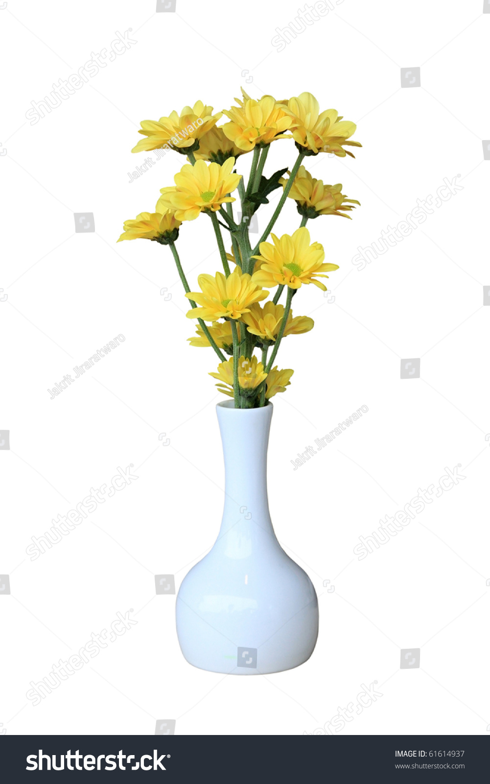 Small yellow vase choice image vases design picture small vase yellow flower isolated on stock photo 61614937 small vase with yellow flower isolated on floridaeventfo Images