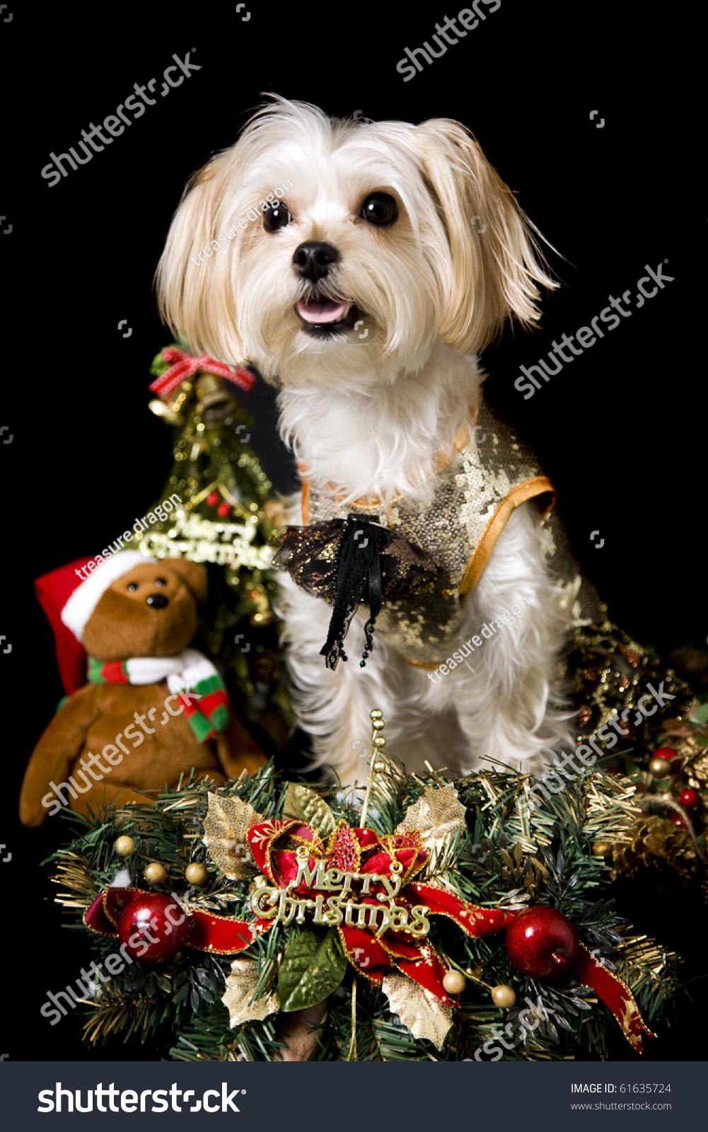 Maltese christmas ornaments - Save To A Lightbox