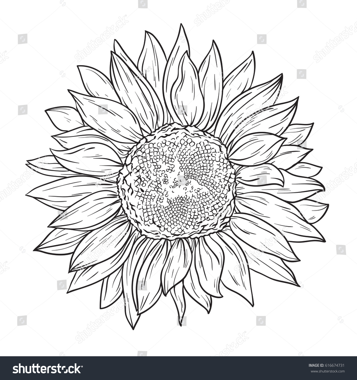 Sunflower In Lines Line Art Style Isolated On White Background Coloring Book
