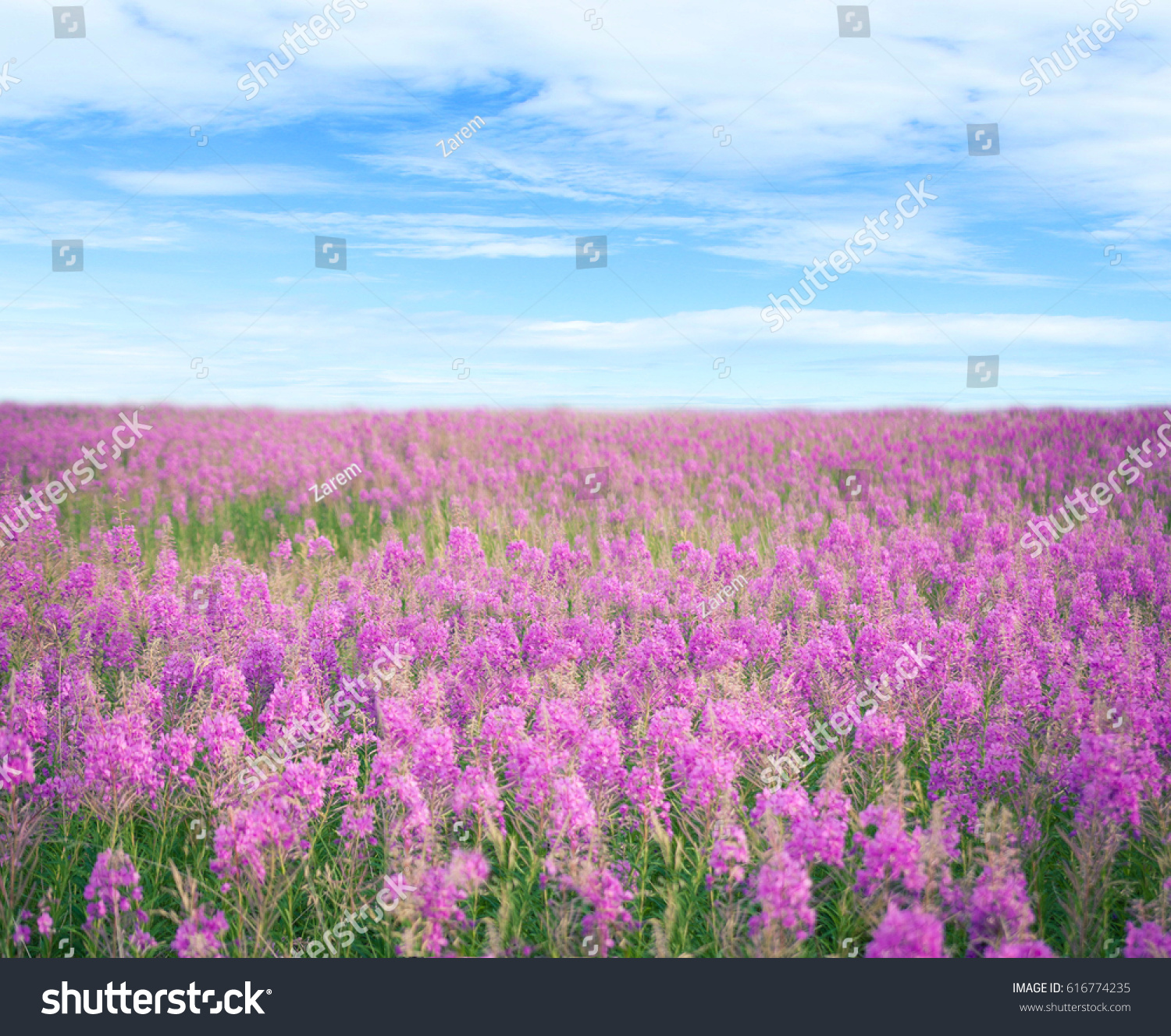 Beautiful view of the field with flowers and blue sky with clouds id 616774235 izmirmasajfo