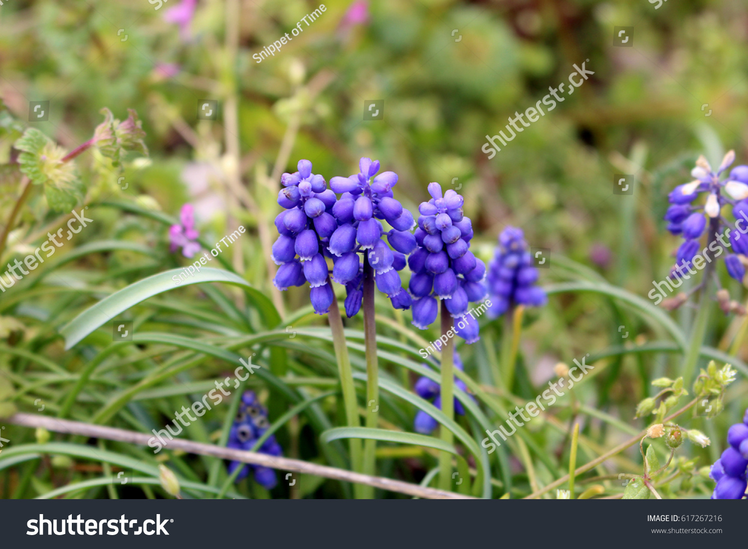 Tiny Blue Bell Flowers Tall Grass Stock Photo Edit Now 617267216