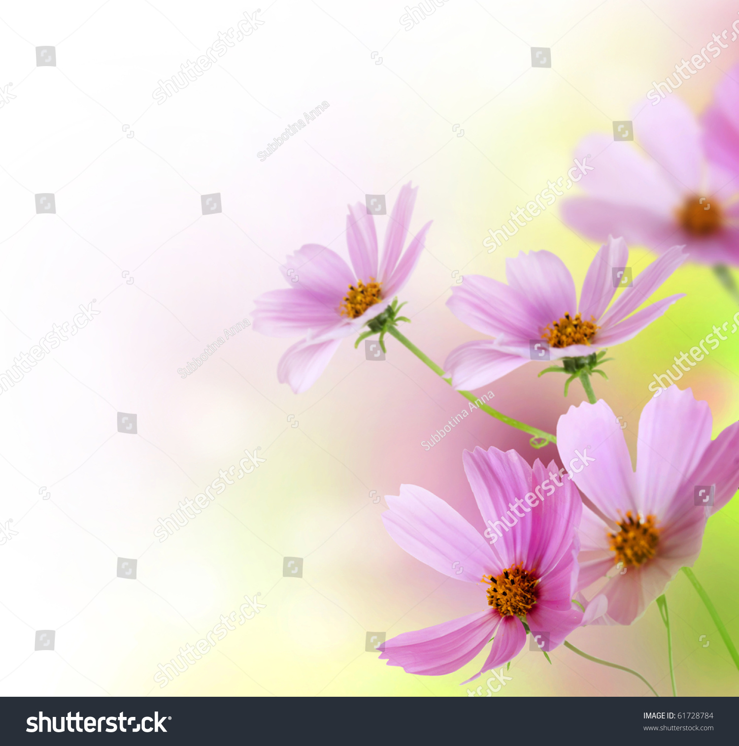 beautiful flowers borderfloral design over white stock