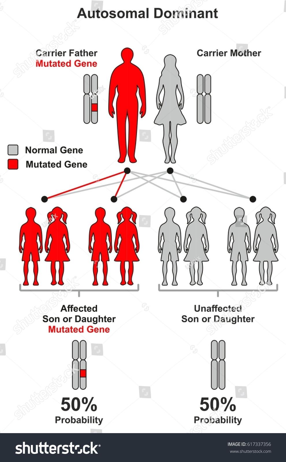 autosomal dominant hereditary trait infographic diagram. Black Bedroom Furniture Sets. Home Design Ideas
