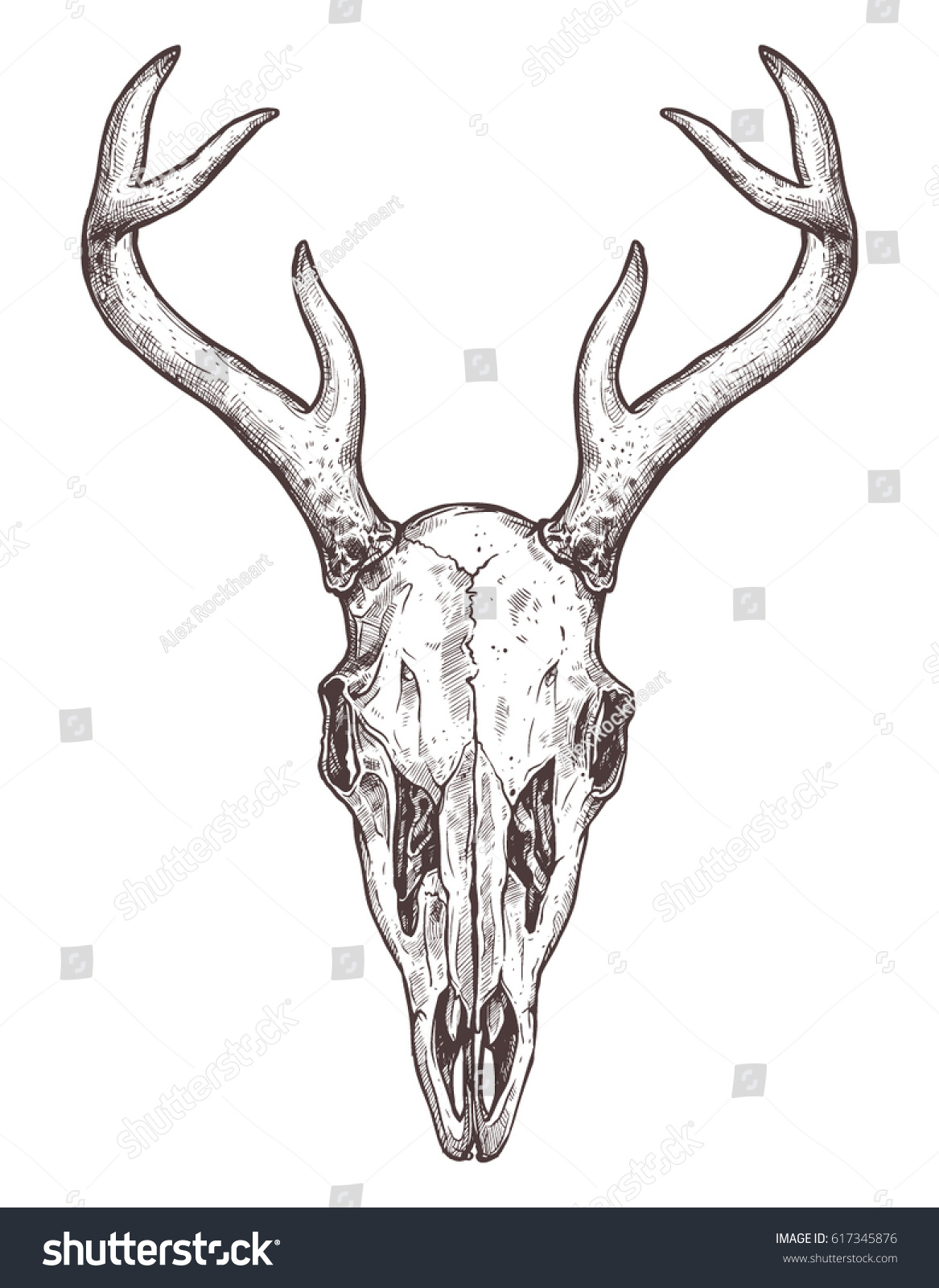 Sketch Deer Skull Boho Hand Drawn Stock Vector 617345876 - Shutterstock