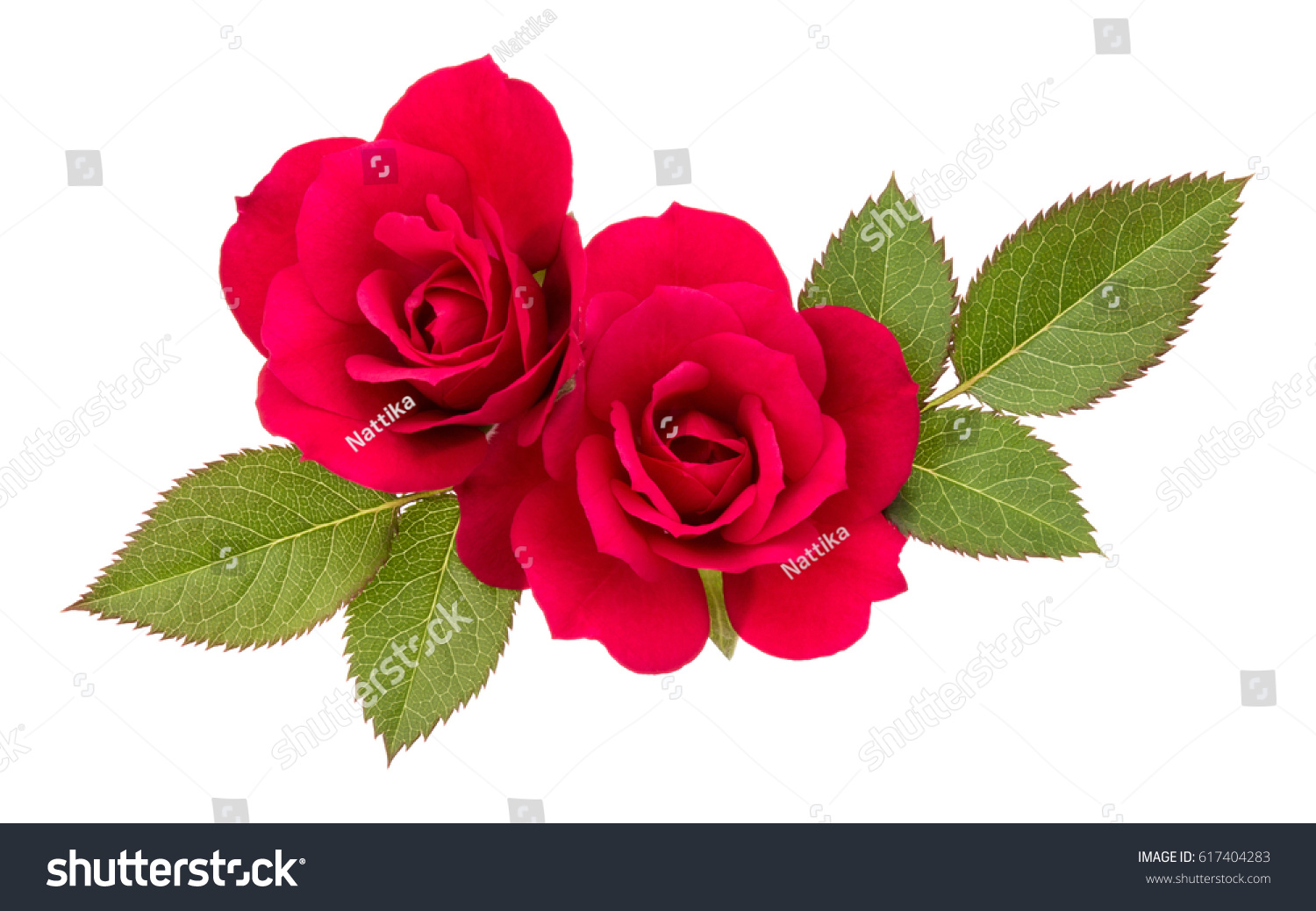 Red Rose Flower Bouquet With Green Leaves Isolated On White