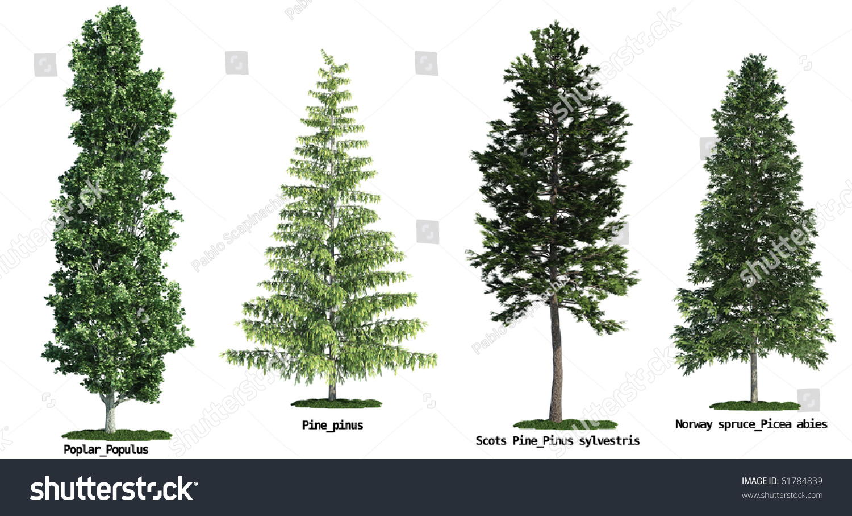 Pine Tree Identification Youtube Autos Post