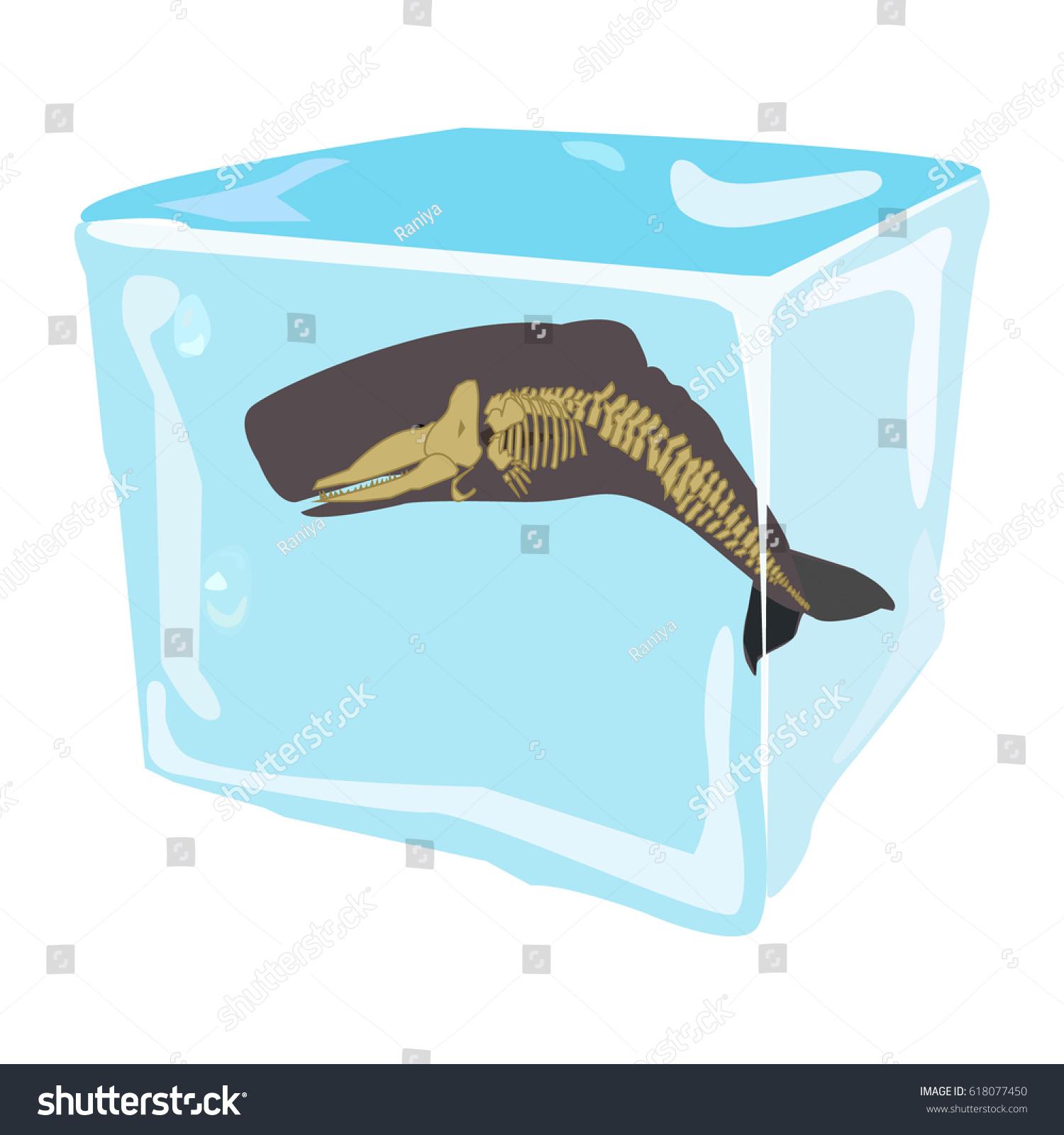 Sperm Whale Icon Logo Symbol Skeleton Stock Vector Royalty Free