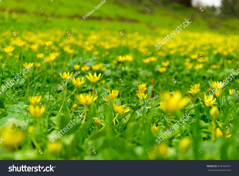 Bright Little Yellow Flowers Ez Canvas