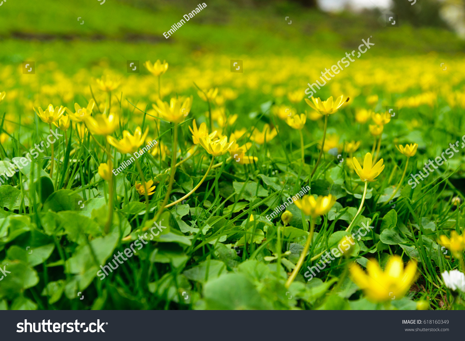 Beautiful Spring Flowers With The Morning Sunlight Flower Garden