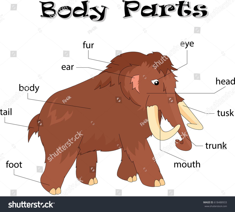 Mammoth Body Parts Animal Anatomy English Stock Illustration