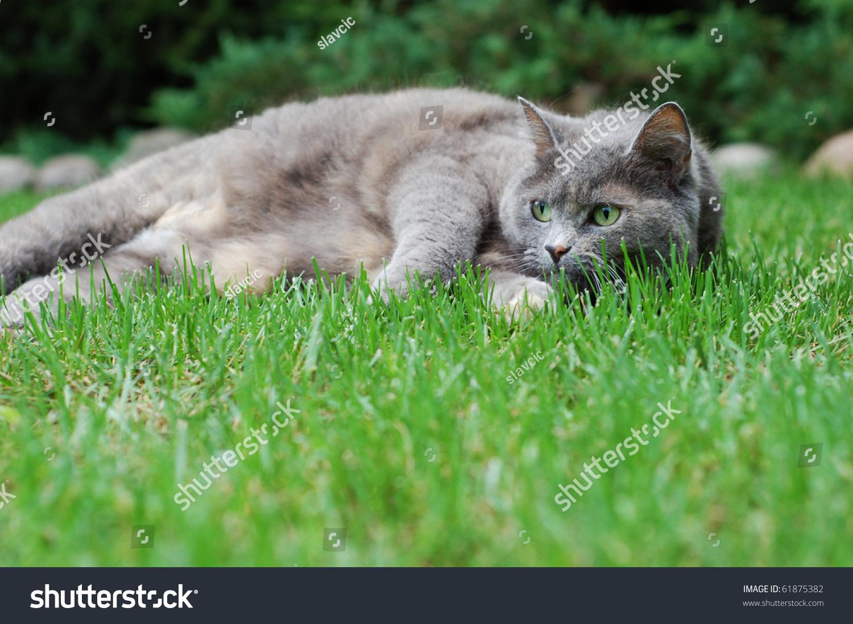 get rid of cat fleas