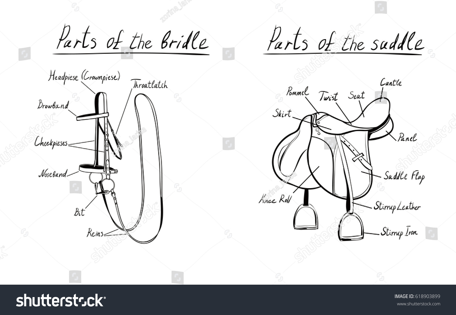 Parts Saddle Bridle Vector Terms Equestrian Stock Vector Royalty Free 618903899