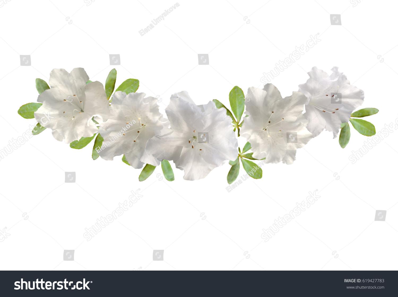 Azalea White Flower Garland On White Stock Photo (Edit Now ...